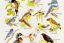 Drawing birds inspiration