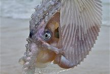 Hai Shell