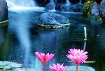 Лотос  * Lotus