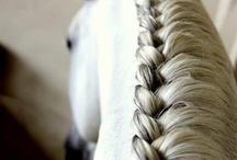 horse hairs