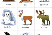 Arctic Animals Unit / For research of habitat, camouflage, adaptations