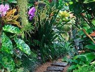 gardens subtropical