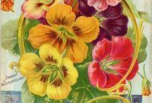 colour graphics