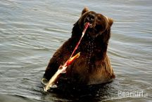 Bears / the most fascinating part of northen landscape