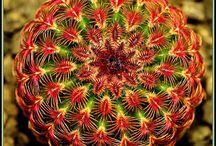 Ouaou / Euforbia och cactus