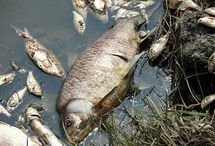 How pollution affects fishing