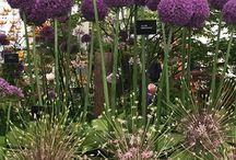 Gardens plants