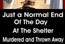 i hate kill shelters