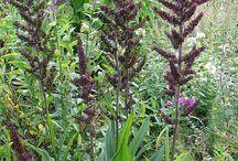 Oudolf - Long season plants