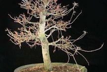Aquarioum and Bonsai Tree II