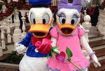 Donald & Daisy~ A Duck Dynasty / From history of the romance, to Disney Park appearances to runDisney costumes; all an homage to the duck duo!