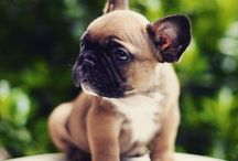 cute zvířádka