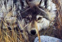 Wolf...