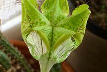 Le mie piante / Piante grasse e succulente