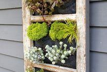 Small garden / by Laura Scorza Wade