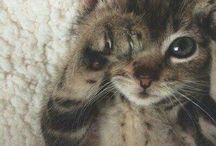 Kitt.