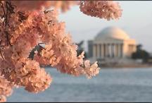 National Cherry Blossom Festival / March 20-April 13, 2014 Washington, D.C. http://www.nationalcherryblossomfestival.org/