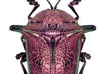 Insekter / Smukke farver