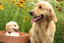 Doggy!!!!