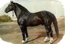 Horse - Альбом пород лошадей СССР