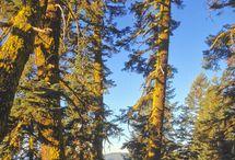 Hiking, Camping, Outdoor Activities
