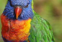 Homesteading - Parrots