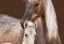 Beautiful Horses / Grace and Power Fire and Ice Heart and Soul