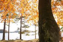 Autumn in Southern Norway / The Autumn is a great time to visit Southern Norway. The colors will make you want to stay here.
