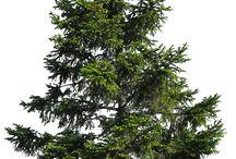 ПНГ деревья
