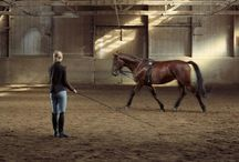 Lungeing horses