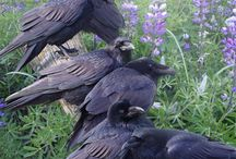 Ravens and Black Crows / by Andrea Reed