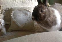 Rabbits! / I love these amazing animals!