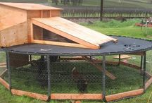 Chicken Coops and Rabbit Hutches / by Erin Sutton
