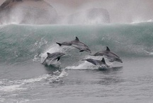 Animals : Surfing and Diving - The Original Masters / Dolphins & Whales - we can't compete with their mastery of the waves and the deep.