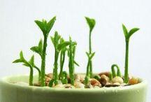 PLANTS /  http://diyeverywhere.com/2017/05/07/7-awesome-plants-that-repel-bugs-and-pests/?src=interxpromo&ro=1&et=fbad&eid=59158_a&pid=59158&k=lgvs1v3gaen00098&t=mxp  http://diyeverywhere.com/2017/05/07/7-awesome-plants-that-repel-bugs-and-pests/?src=interxpromo&ro=1&et=fbad&eid=59158_a&pid=59158&k=lgvs1v3gaen00098&t=mxp