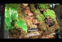 Everything amphibian