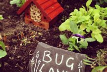 Allotment Bugs / All the little bugs in and round our allotment :)
