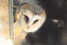 uilen van Paul Christiaan Bos en andere kunst uilen