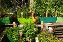 Home grown / Inspirasion to my garden
