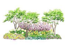 Puutarhahaaveita