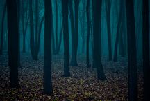 In the woods / by Julie Ayers