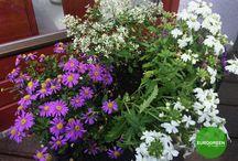 Containre Garden Ideas