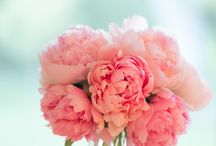 Flowers I find beautiful