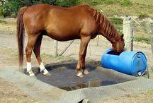 Ponys and horses