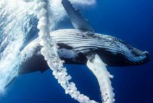 The Ocean(Whales, Sharks and many others)