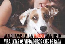 Documentário - Vira-Latas Os verdadeiros cães de raça / www.vira-latas.com
