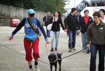 Vakvezető kutyák a Hungaroringen 2014 szeptember / A Baráthegyi Vakvezető Kutya Iskola interaktív érzékenyítő programjára az idei WSR-en a Hungaroringen a tavalyihoz képest még többen voltak kíváncsiak, köszönhetően annak is talán, hogy nem mindig esett az eső :)