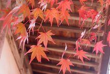 Japanese fall