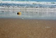 VNG i el mar