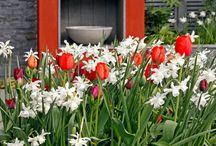 Bold Red Garden